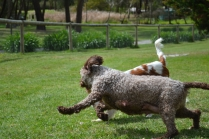 banksia-park-puppies-fire-19-of-29