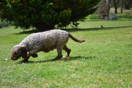 banksia-park-puppies-fire-2-of-29