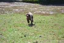 Banksia Park Puppies Fire