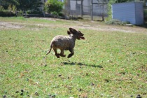 Banksia Park Puppies Fire