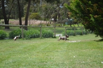 banksia-park-puppies-fire-9-of-29