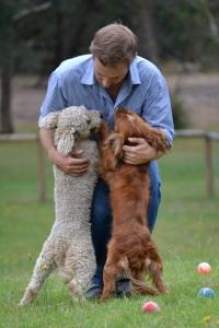 Banksia Park Puppies Ollie 12