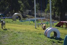 Banksia Park Puppies Oops - 1 of 54