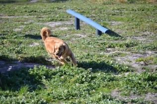Banksia Park Puppies Oops - 12 of 54
