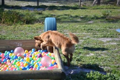 Banksia Park Puppies Oops - 13 of 54