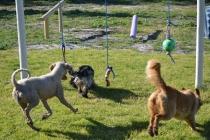 Banksia Park Puppies Oops - 27 of 54