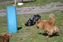 Banksia Park Puppies Oops - 29 of 54