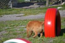 Banksia Park Puppies Oops - 30 of 54