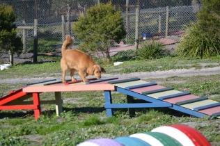 Banksia Park Puppies Oops - 34 of 54