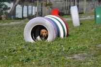 Banksia Park Puppies Oops - 37 of 54