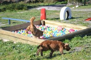 Banksia Park Puppies Oops - 44 of 54