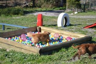 Banksia Park Puppies Oops - 45 of 54