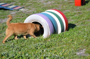 Banksia Park Puppies Oops - 49 of 54