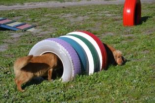 Banksia Park Puppies Oops - 50 of 54
