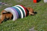 Banksia Park Puppies Oops - 51 of 54