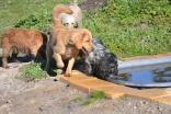 Banksia Park Puppies Oops - 54 of 54