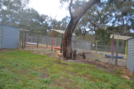 banksia-park-puppies-oopski-1-of-21