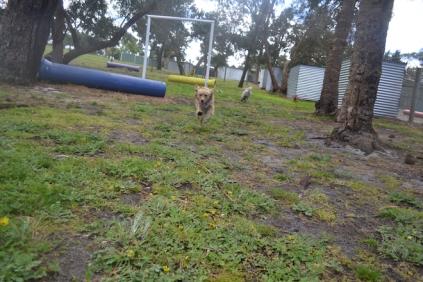 banksia-park-puppies-oopski-10-of-21