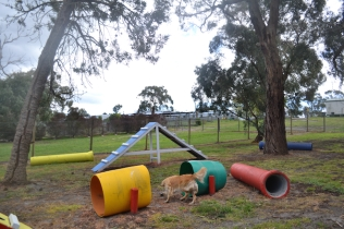 banksia-park-puppies-oopski-13-of-21