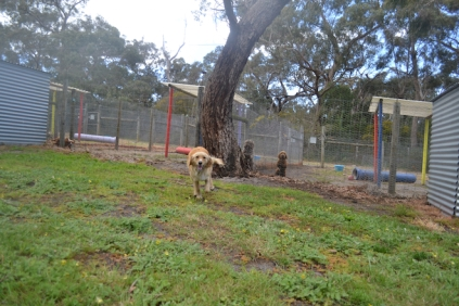 banksia-park-puppies-oopski-2-of-21