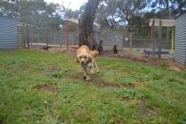 banksia-park-puppies-oopski-3-of-21