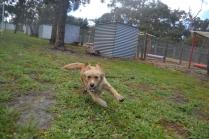banksia-park-puppies-oopski-4-of-21