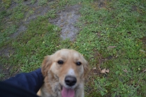 banksia-park-puppies-oopski-6-of-21