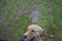 banksia-park-puppies-oopski-7-of-21