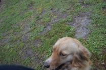 banksia-park-puppies-oopski-8-of-21