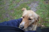 banksia-park-puppies-oopski-9-of-21