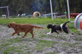 Banksia Park Puppies Cosmic - 1 of 9