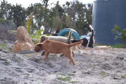 Banksia Park Puppies Cosmic - 2 of 9