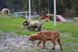 Banksia Park Puppies Cosmic - 4 of 9