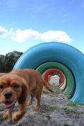 Banksia Park Puppies Cosmic - 5 of 9