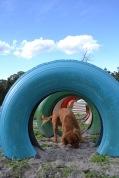 Banksia Park Puppies Cosmic - 6 of 9