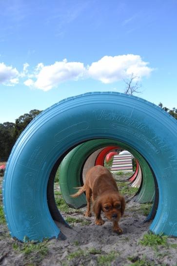 Banksia Park Puppies Cosmic - 7 of 9