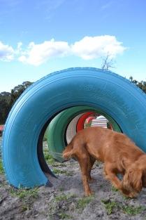 Banksia Park Puppies Cosmic - 9 of 9