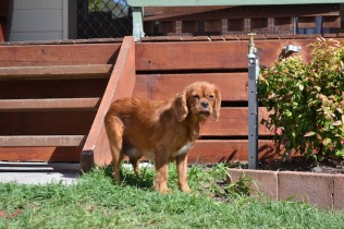 Banksia Park Puppies Halo