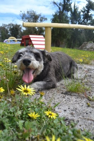 banksia-park-puppies-lolly-12-of-17