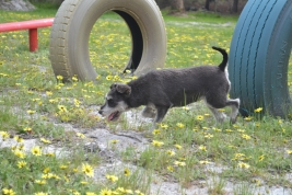 banksia-park-puppies-lolly-17-of-17