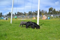 banksia-park-puppies-loopy-10-of-15