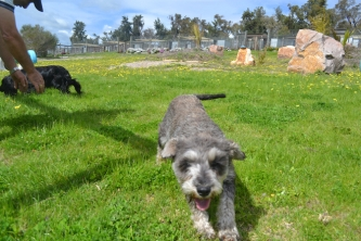 banksia-park-puppies-loopy-11-of-15