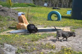 banksia-park-puppies-loopy-3-of-15