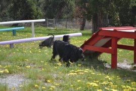 banksia-park-puppies-loopy-4-of-15