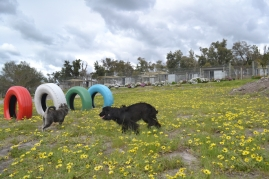 banksia-park-puppies-lulu-4-of-9