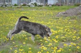 banksia-park-puppies-lulu-5-of-9