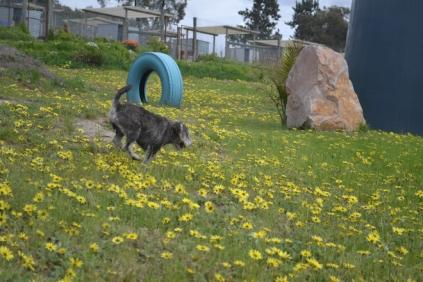 banksia-park-puppies-lulu-7-of-9