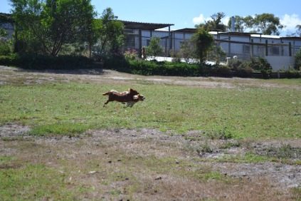 Banksia Park Puppies Muffin Ravi - 11 of 28