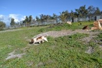 Banksia Park Puppies Ravi - 31 of 39
