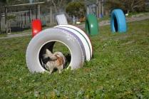 Banksia Park Puppies Ravi - 34 of 39